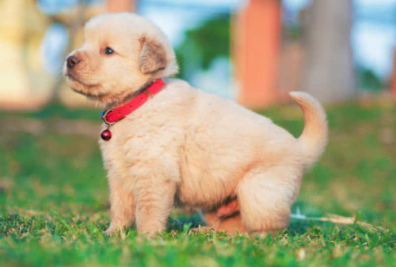 Things to Think About Before Introducing a Dog