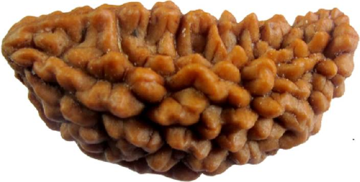 Ek Mukhi Rudraksha Price And More Information