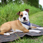 Top 10 Tips for Traveling with Pets