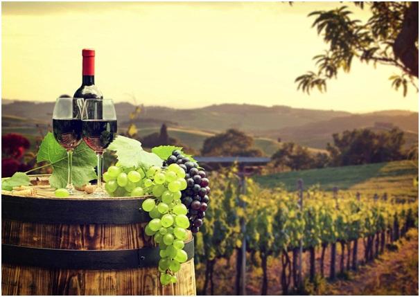 Long Island wine tours